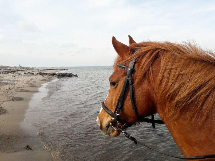 Sea Beach Sand Water Sky Close-up Horizon Over Water Pony Working Animal Horseback Riding