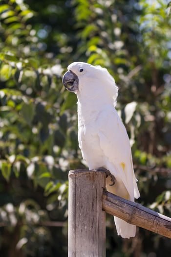 Close-up of parrot perching on bamboo