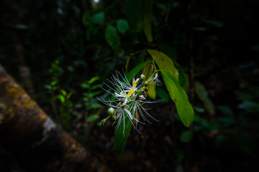 WideFlowers Green Nam Cát Tiên National Park Beauty In Nature Beginnings Close-up Day Field Focus On Foreground Fragility Freshness Green Color Growth Land Leaf Nature No People Outdoors Plant Plant Part Selective Focus Tree Vulnerability  Wideflower