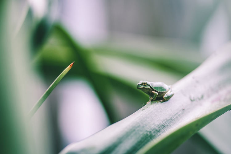Close-Up Of Small Frog On A Plant