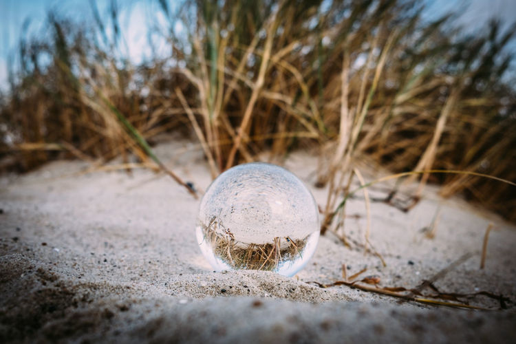 Crystal Ball Reflection Beach Close-up Day Nature No People One Animal Outdoors Sand Selective Focus