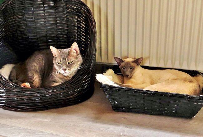 Kathrine and Svea in relaxing mode. ❤️ Tadaa Community EyeEm My Pets