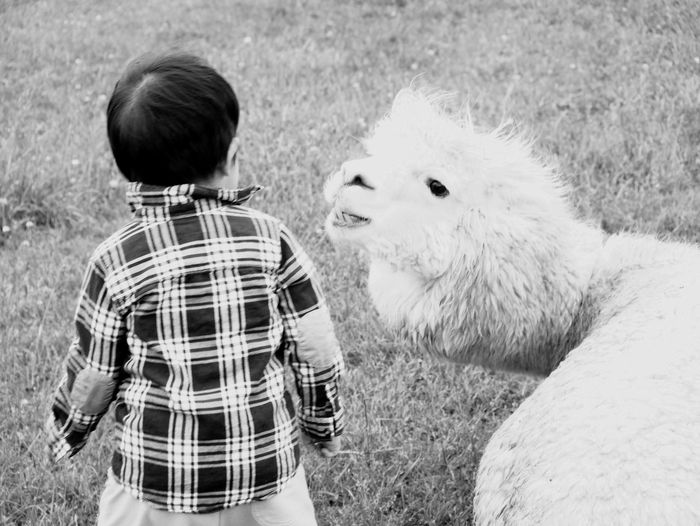 Rear view of boy with alpaca on land