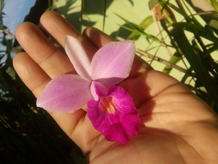 Bom dia! Orquideas❤ OrquideaBambu EyeEm Nature Lover LoveNature