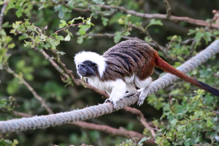 Cotton Top Tamarin Animal Animal Themes Avian Beauty In Nature Branch Close-up Day Focus On Foreground Nature No People Outdoors Perching Selective Focus Sparrow Tree Twig Wildlife