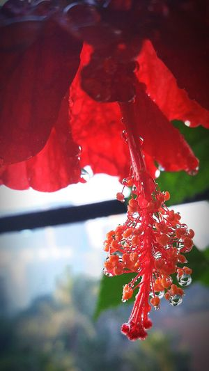 Red Nature Beauty In Nature Close-up Plant Outdoors No People Flower Day Fragility Freshness mobileclick