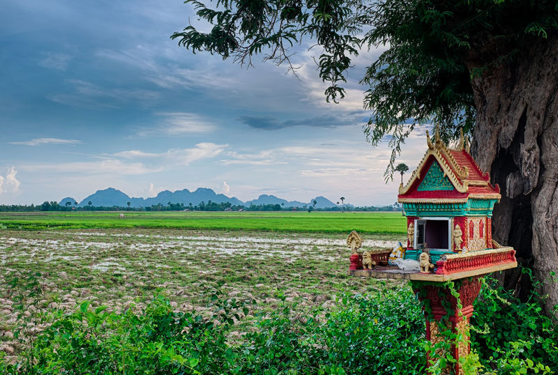 Agriculture Animism Beauty In Nature Buddhism Cambodia Cloud - Sky Day Field Growth Idyllic Kampot, Cambodia Landscape Nature Offering Outdoors Paddy Field Rice Field Rural Scene Scenics Sky Spirit House Spirits Tranquil Scene Tranquility Tree