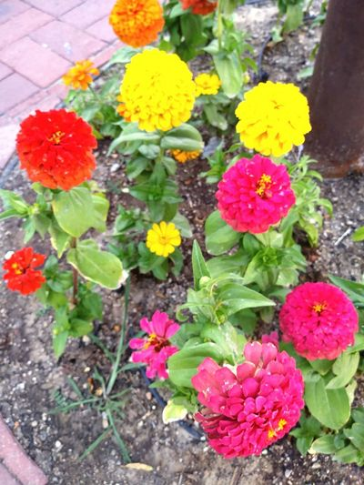 Flower Head Flower Multi Colored Leaf Petal High Angle View Yellow Close-up Plant Green Color In Bloom Plant Life Blooming