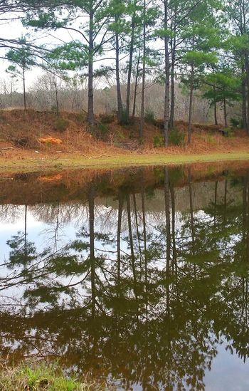 Reflections Trees Pine Trees Reflection Water Mirrors Water Photography Nature Photography TURN UPSIDE-DOWN, COOL HUH?
