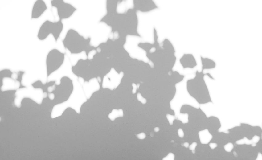 Close-up of shadow on white wall