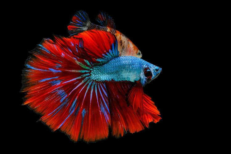 Close-up of orange fish underwater