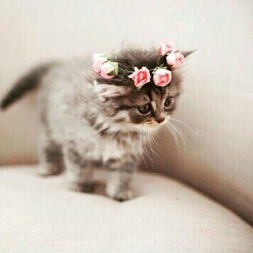 Hi! Love ♥ Cat♡ Animal Photography Beutiful Cat :)