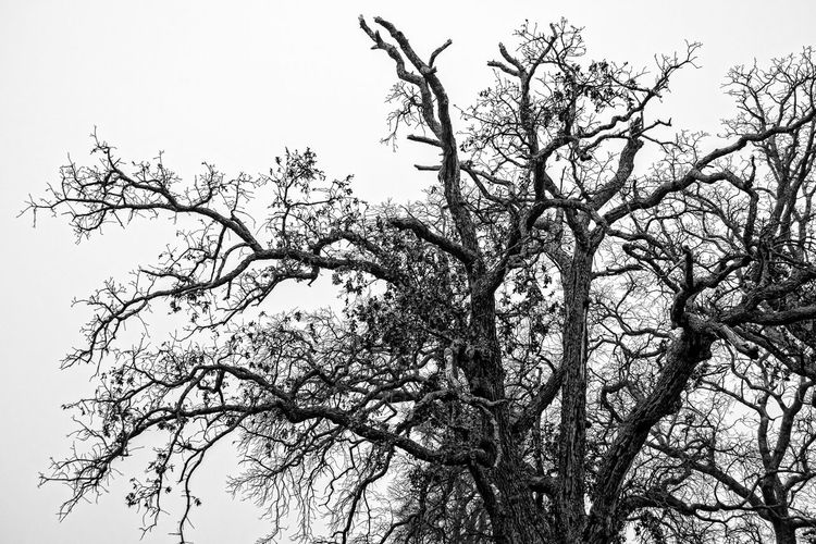 Branches Trees Black & White Black And White