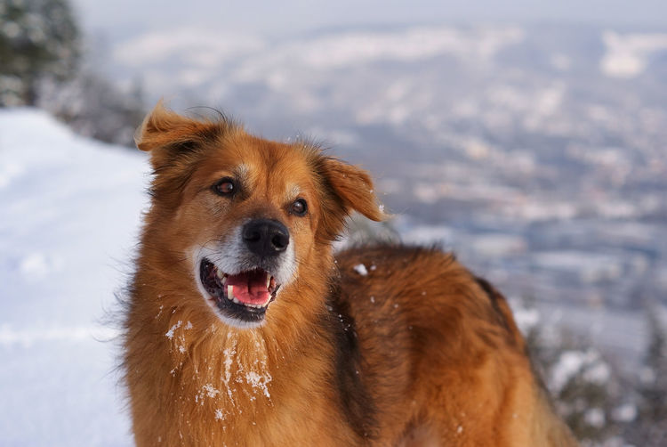 Cute Dog smiling at Camera GERMANY🇩🇪DEUTSCHERLAND@ Jena Animal Themes Close-up Cold Temperature Day Dog Domestic Animals Focus On Foreground Germany Looking At Camera Mammal Nature No People One Animal Outdoors Pets Portrait Sky Snow Water Winter