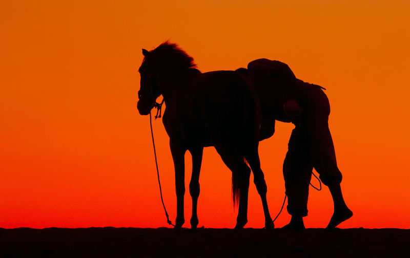 Silhouette of horse on field during sunset