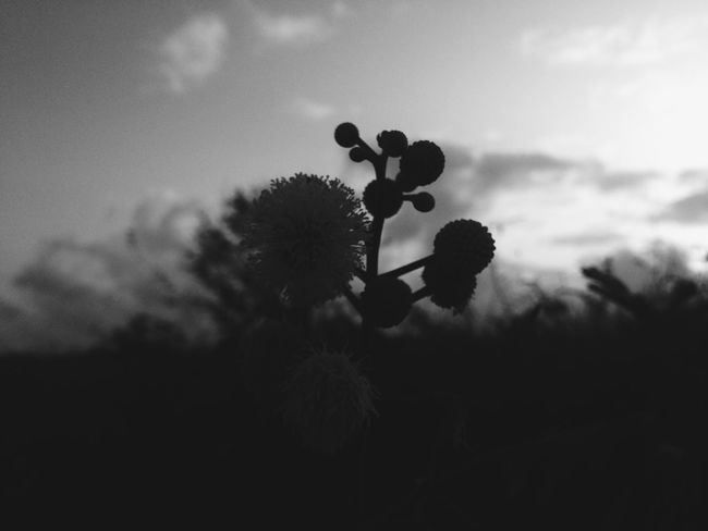 Shillouette Shadow Flower Flowers EyeEm Nature Lover Blackandwhite Black And White Black & White Nature Photography Flowerporn