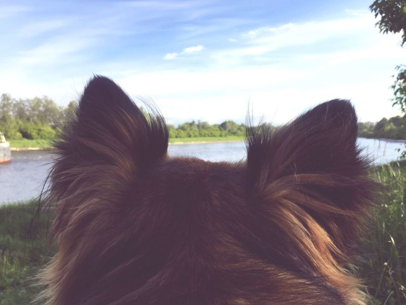 Day River Cloud - Sky Outdoors Nature Animal Themes Domestic Animals No People Dogslife Dogs Of EyeEm Dogs Ears Live For The Story Pet Portraits
