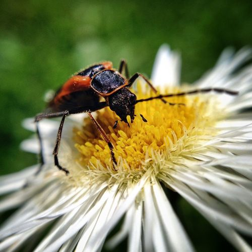 Bugs life Nature EyEmNewHere Invertebrate Insect Animal Themes Animal Wildlife Animals In The Wild Animal One Animal Close-up Flower Head Beauty In Nature Plant Flower