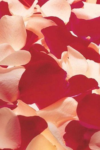 Le rose sono rosse le rose sono belle come caramelle gemelle??
