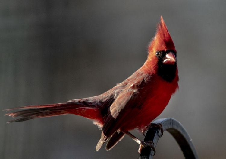 Angry Bird Bird