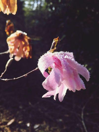 Close-up of honey bee on flower