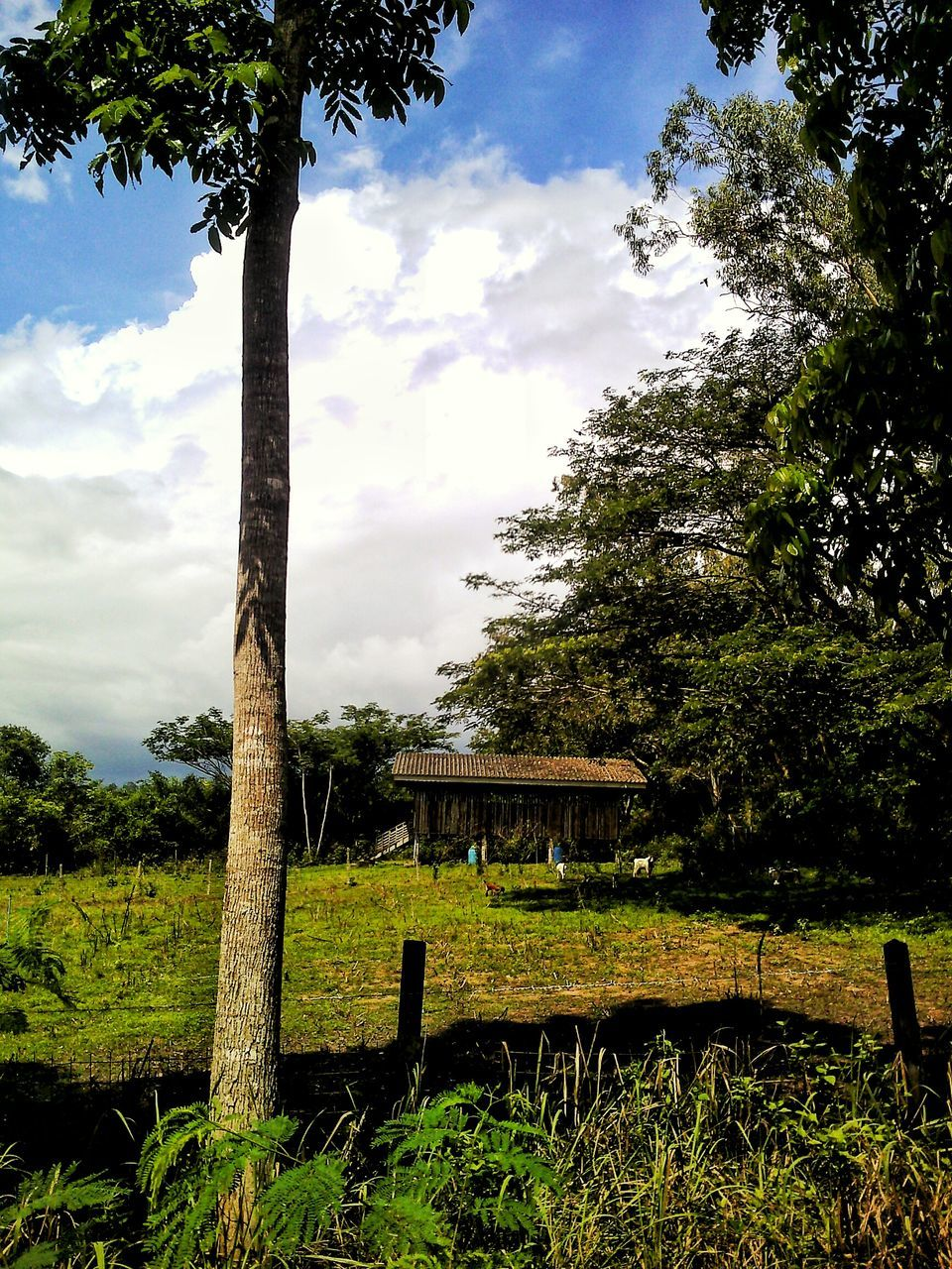 tree, sky, cloud - sky, growth, nature, day, outdoors, built structure, tranquility, no people, beauty in nature, architecture, scenics, landscape, tree trunk, tranquil scene, branch, green color, grass