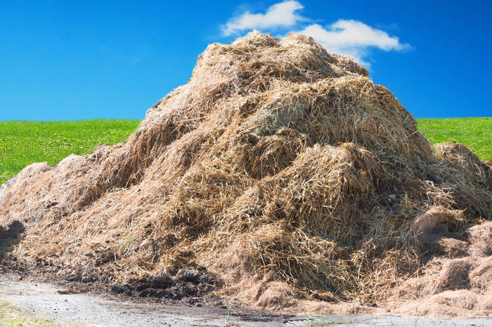 A manure pile on a farm in the background a wall of bricks. Animal Watching Beauty In Nature Biomass Clear Sky Day Dropping Dunghill Field Grass Growth Landscape Manu Nature No People Outdoors Scenics Sky Straw Sunlight Tranquil Scene Tranquility Tree