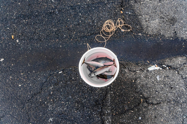 High angle view of fishes in bucket on road