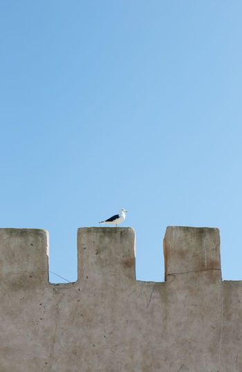 Low angle view of seagulls perching on building against clear blue sky