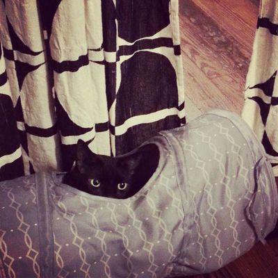 Monster Hiding Monstercat