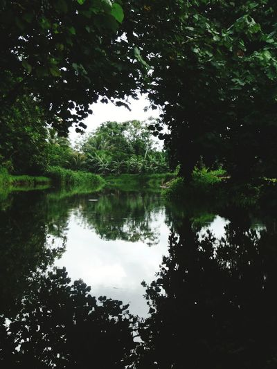 Tropical River in Raiatea Tropical Forest Multi Faces Of French Polynesia Pentax K-50 Raiatea River Green Color Tree Water Lake Reflection Symmetry Backgrounds Animal Themes Sky