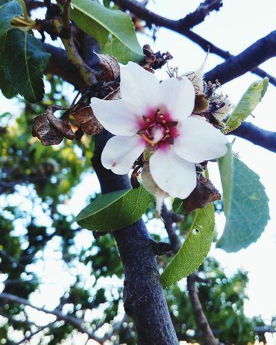 Flower Blossom Beauty In Nature Sky Springtime Photos BeautifulSpring Tree T Nature Photography White Color Photography PhonePhotography 🌿☘️🌲🍃 🌸flower🌸 Nice Wildlife Sunlight S