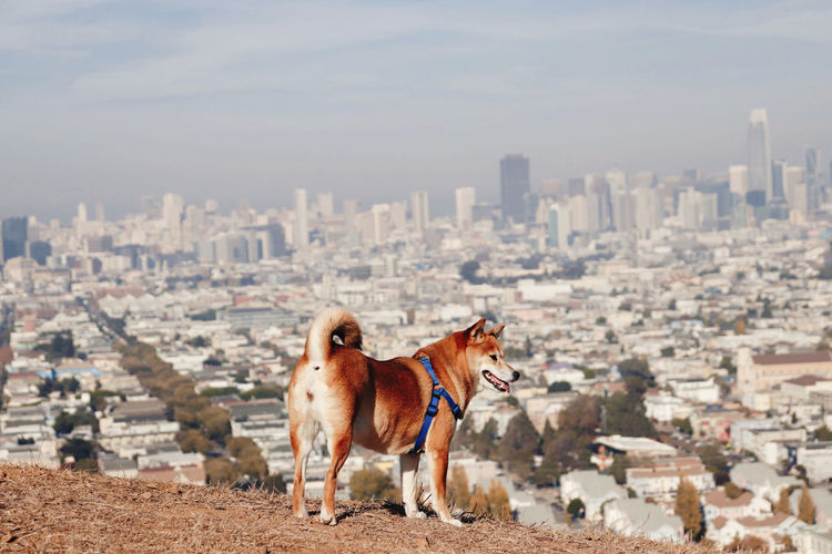 View of a dog on city