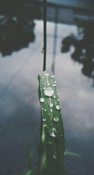 Lluvia Dia Oscuro *-*