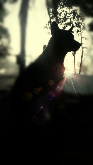 dog alone.