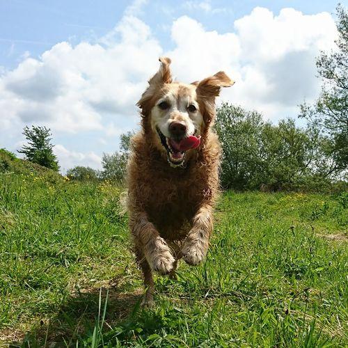 Dog Love DogLove Dogs Of EyeEm Dog❤ Canine Love :) Doglovers Dogs_of_instagram Dog Photography Canine Photography Dog Walking Pets Dogslife Dog Domestic Animals Dogsareawesome