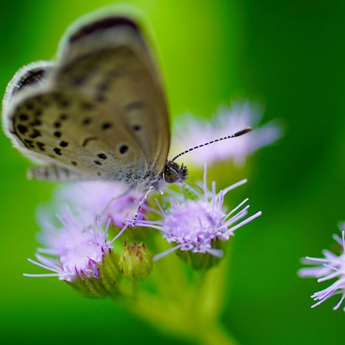 MacrotMacro_collection&butterfly]蝶々Flowersa花ro_collection