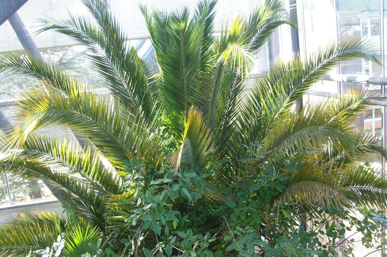 growth, plant, palm tree, green color, nature, no people, day, close-up, tree, leaf, outdoors, beauty in nature, freshness