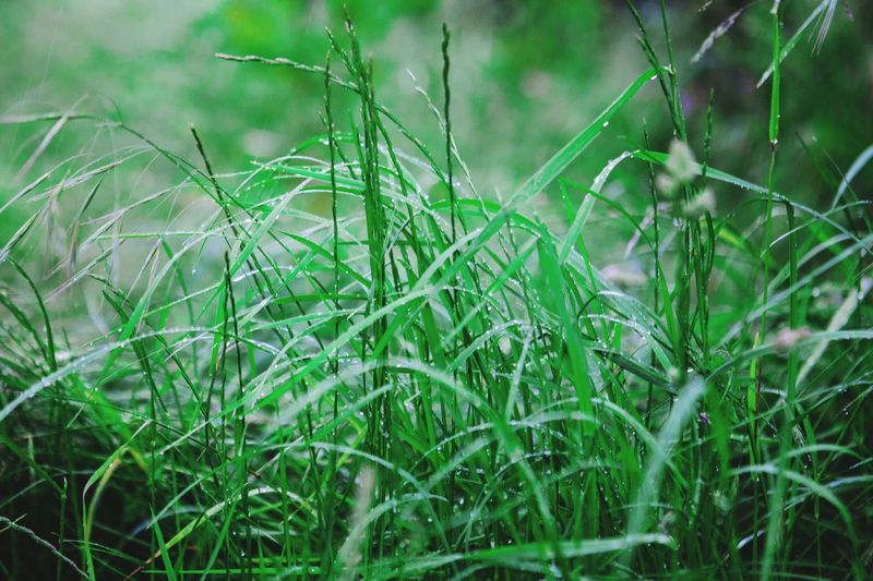 Wet Grass EyeEm