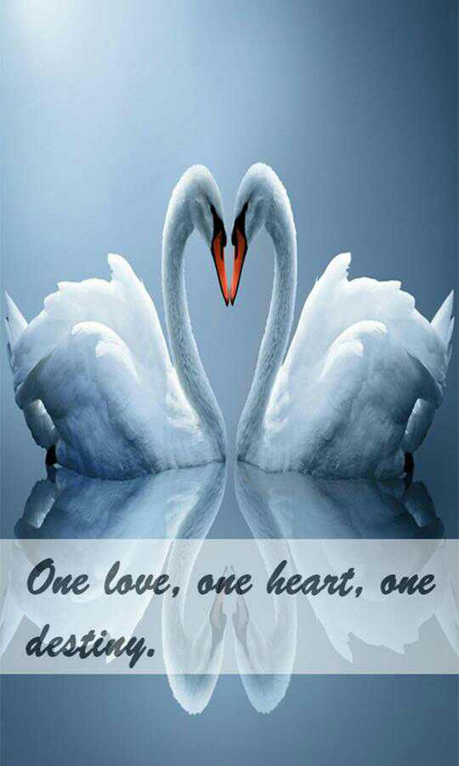 white color, heart shape, love, no people, beauty in nature, close-up, togetherness, outdoors, day, swan