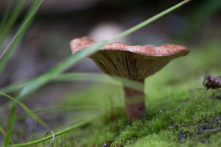 Close-up of mushroom in grass