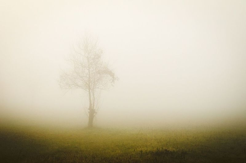 Fog in the mornig close to the River Nature Photography Beauty In Nature Hagging A Tree Landscape