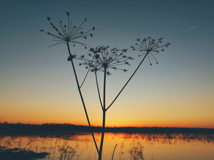 Silhouette plant by lake against sky during sunset