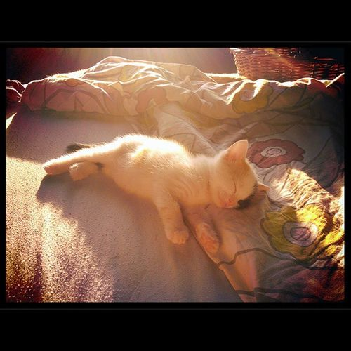 Sleeping on sunshine. Micina Nuovoamore Buffy Cucciolo Made with @nocrop_rc Rcnocrop