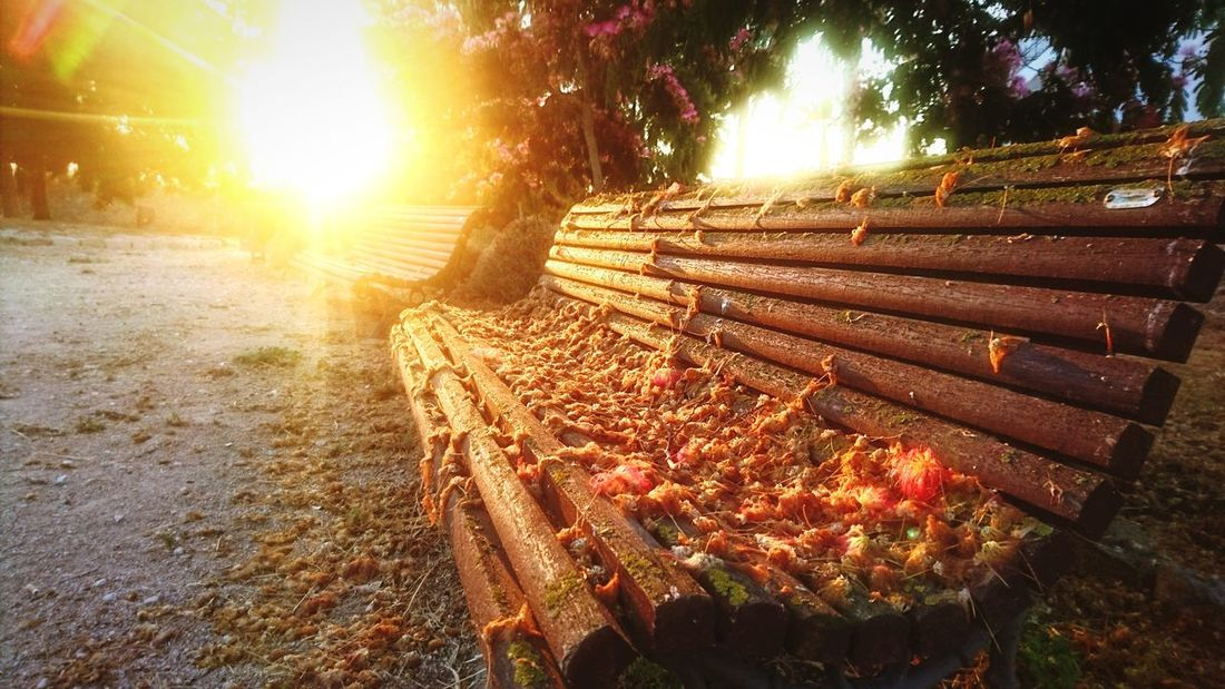 Tree Growth Agriculture Outdoors Sun Sunlight Nature Rural Scene No People Beauty In Nature Sunset Sky Day Freshness