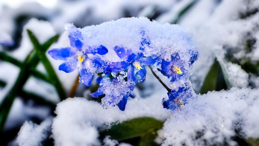 Close-up of frozen purple flower