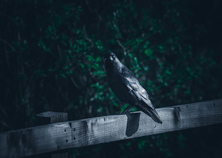 Bird perching on wooden railing