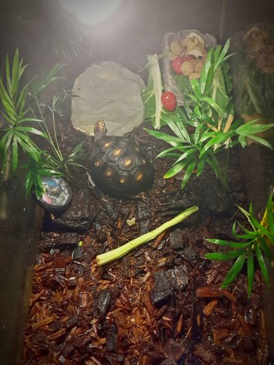 My little pet!!! 😀😊 Check This Out Enjoying Life Mexico City Streetphoto_color Hello World Pets Tortuga De Tierra Turtles Tortoise Patasrojas Carbonaria Tortuga Carbonaria Pet My Pet