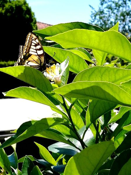 Nature Plant Outdoors Butterfly - Insect Animal Themes Green Color Butterfly Fragility Beautiful Beauty In Nature