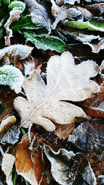 Frosty morning Frosty Frosty Mornings Frost Leaf Winter It's Cold Outside